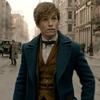 Animais Fantásticos e Onde Habitam | J.K. Rowling anuncia que franquia vai dar origem a cinco filmes