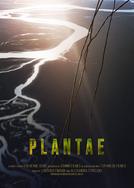 Plantae (Plantae)