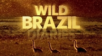 Brasil Selvagem - Poster / Capa / Cartaz - Oficial 2