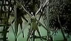 Savage Island (1985) Linda Blair, Ajita Wilson (slightly edited trailer)