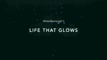 Attenborough's Life That Glows - Poster / Capa / Cartaz - Oficial 1