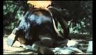 El Bosque del Lobo (The Ancines Woods) (Pedro Olea, España, 1971) - Trailer