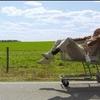 """Comédia bizarra real em trailer de """"Jackass Presents: Bad Grandpa"""""""