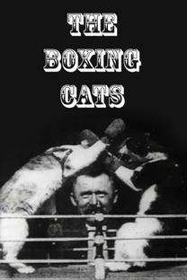 The Boxing Cats (Prof. Welton's) - Poster / Capa / Cartaz - Oficial 1