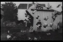 Feeding the Doves - Poster / Capa / Cartaz - Oficial 1