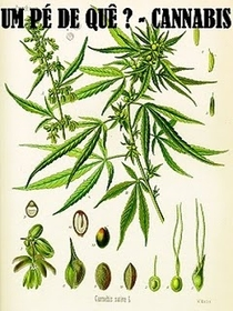 Um pé de quê? Cannabis - Poster / Capa / Cartaz - Oficial 1