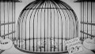 Silly Symphonies - The Bird Store