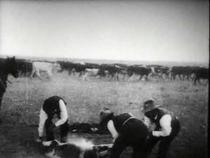 Branding Cattle - Poster / Capa / Cartaz - Oficial 1