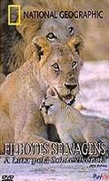 National Geographic: Filhotes Selvagens - A Luta pela Sobrevivência - Poster / Capa / Cartaz - Oficial 1