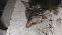Meu Gato Endiabrado - Poster / Capa / Cartaz - Oficial 2