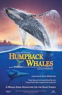Humpback Whales (Humpback Whales)