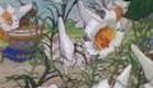Coelhinhos Engraçadinhos