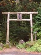 Aokigahara - A Floresta dos Suicidas