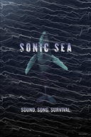 Sonic Sea (Sonic Sea)