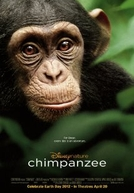 Chimpanzé (Chimpanzee)