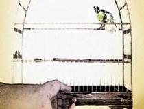 O Paradoxo do Passarinho - Poster / Capa / Cartaz - Oficial 1