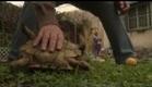 QUERIDA VOY A COMPRAR CIGARRILLOS Y VUELVO - Trailer Oficial HD