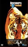 Operação Tigres de Bengala  - Poster / Capa / Cartaz - Oficial 1