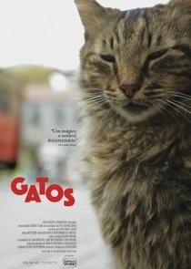 Gatos - Poster / Capa / Cartaz - Oficial 4