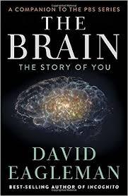 O Cérebro (Com David Eagleman) - Poster / Capa / Cartaz - Oficial 1