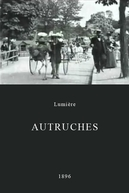 Avestruzes (Autruches)