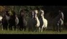 """Cendres et Sang"" - Trailer"