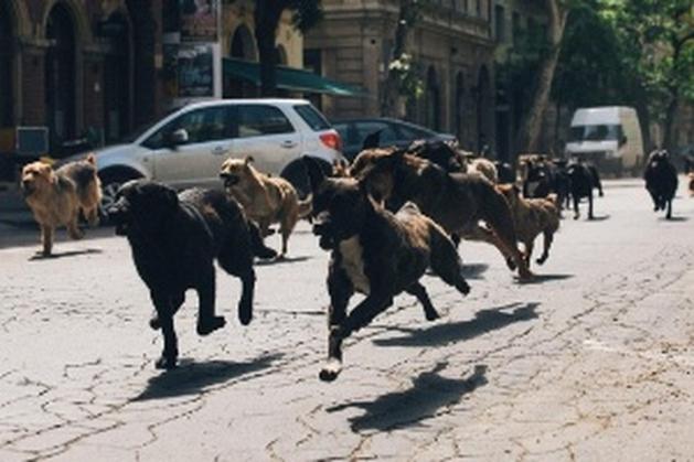 Filme com arrastão de cães vence mostra e é mais comentado em Cannes - Notícias - UOL Cinema