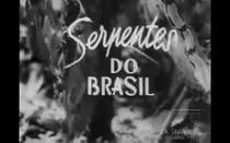 Serpentes do Brasil - Poster / Capa / Cartaz - Oficial 1