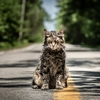 Em nova cena de Cemitério Maldito, gato da família reaparece misteriosamente