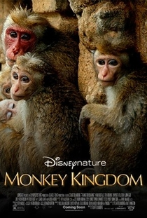 O Reino dos Primatas - Poster / Capa / Cartaz - Oficial 3