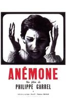 Anémone (Anémone)