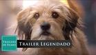 Benji (2018) Novo filme da Netflix - Trailer Legendado