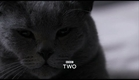 The Secret Life of the Cat: Trailer - Horizon - BBC Two