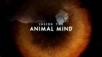 Dentro da Mente Animal - Poster / Capa / Cartaz - Oficial 1