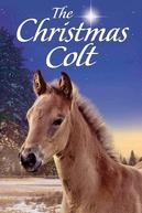 O Potro De Natal (The Christmas Colt)