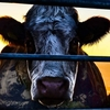 TOP 5 | Documentários para quem quer virar vegetariano - Sons of Series