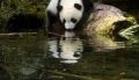 The Amazing Panda Adventure Trailer