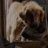 Crítica | Quatro Vidas de um Cachorro | Cinema com Crítica