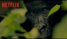 Virunga - Trailer Legendado - Netflix (HD)