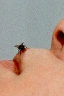 Fly (Fly)