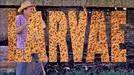Larvae (Larvae)