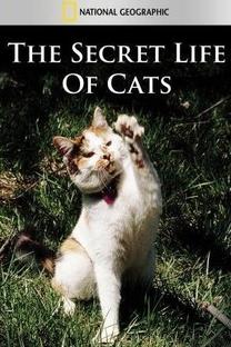 The Secret Life of Cats - Poster / Capa / Cartaz - Oficial 1