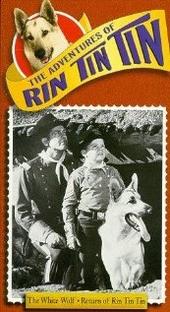 Rin-Tin-Tin - Poster / Capa / Cartaz - Oficial 1