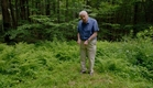 A glowing underground network of fungi - Attenborough's Life That Glows: Preview - BBC Two