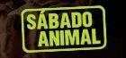 Sábado Animal - Poster / Capa / Cartaz - Oficial 1