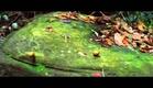 Il Etait une Forêt - Bande annonce officielle - Le 13 novembre au cinéma