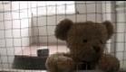 Misery Bear - World Cup