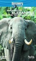 Discovery Channel - Imponentes Elefantes Gigantes - Poster / Capa / Cartaz - Oficial 1