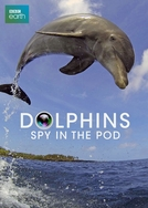 Dolphins - Spy in the pod (Dolphins - Spy in the pod)
