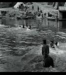 Dragons traversant la Saône à la nage (Dragons traversant la Saône à la nage)